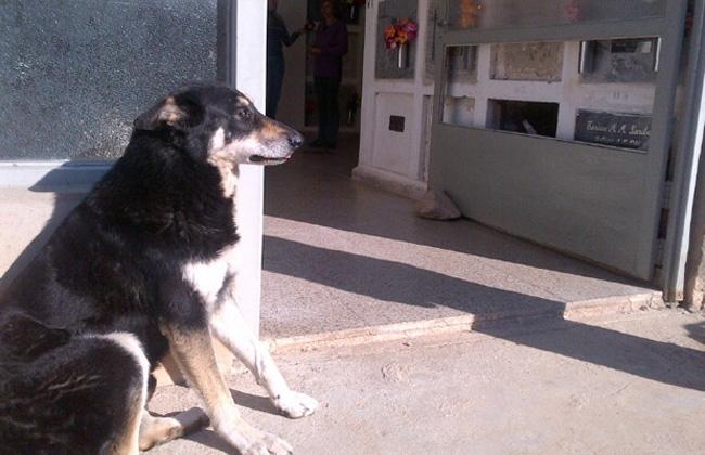 ´Capitán', el perro que vive junto a su dueño muerto