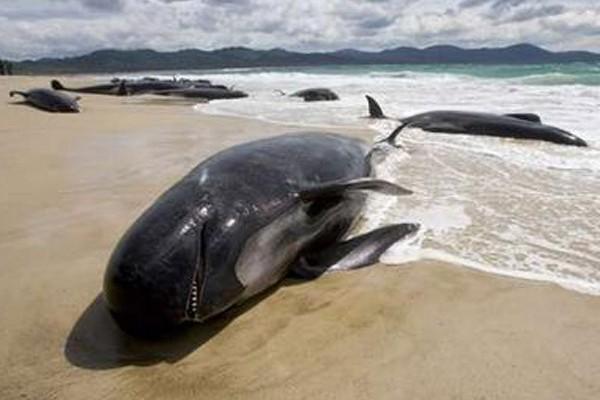 ¿Los animales son capaces de suicidarse?