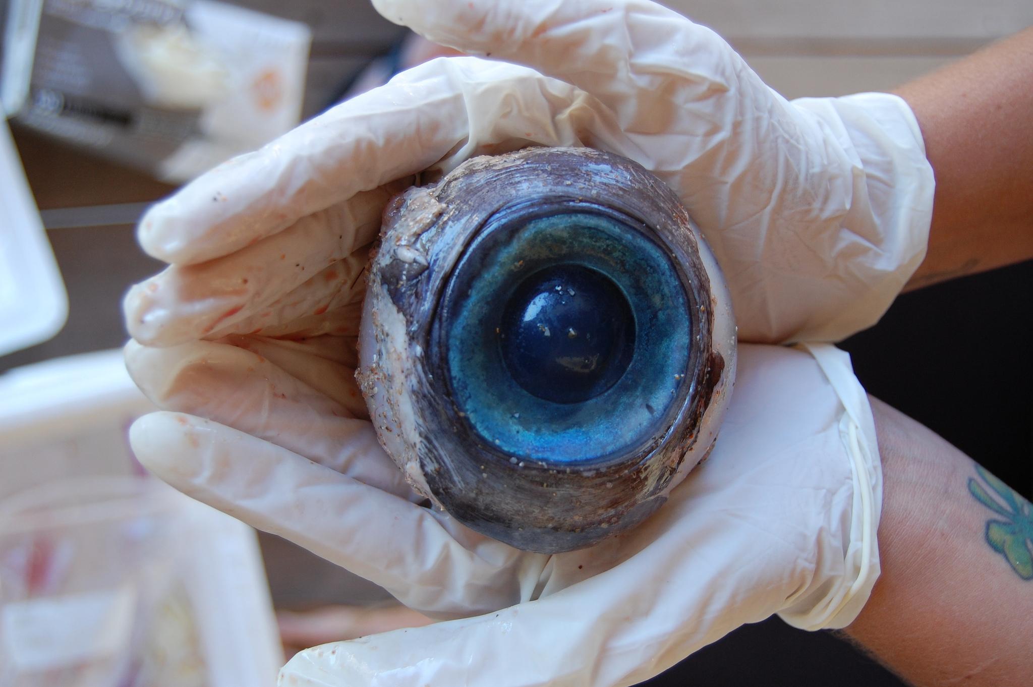Hallan ojo gigante de monstruo submarino