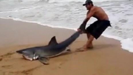 Video: Hombre salva a tiburón blanco herido