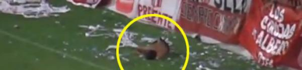 Video: Hincha cae de la tribuna y se perfora los pulmones