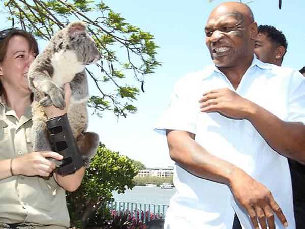 Mike Tyson y su fobia a los koalas - Video