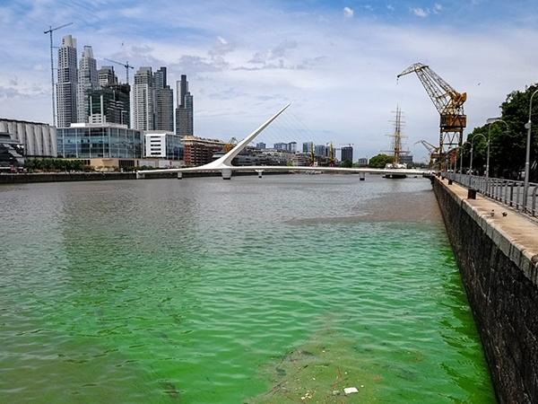 Por qué el color verde en las aguas de Puerto Madero