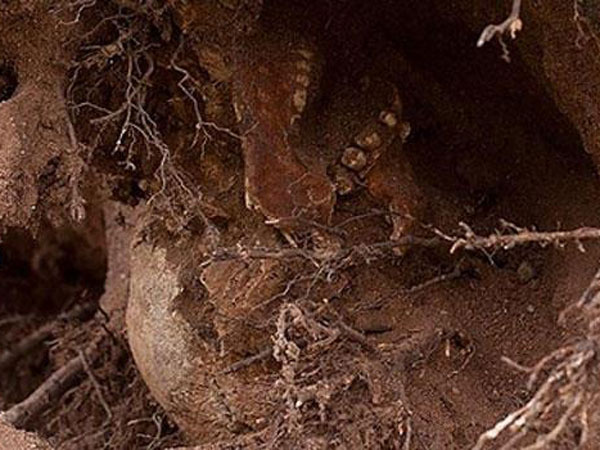 La tormenta 'Sandy' desentierra un esqueleto del siglo XVII