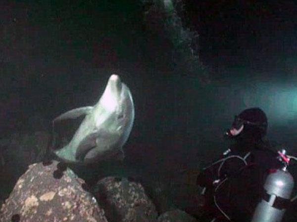 Video: Delfín pide ayuda a un buzo para que lo libere