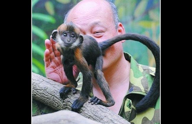 Hombre le lamió el ano a un mono para que pueda evacuar