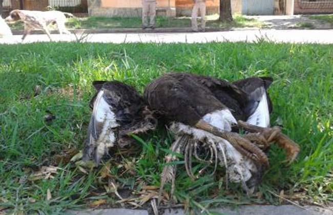 Insólito: un pájaro dejó sin luz a una ciudadInsólito: un pájaro dejó sin luz a una ciudad