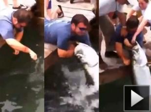 Video: Pez gigante intenta devorarle el brazo